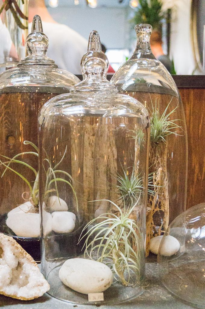The Juicy Leaf x The Shopkeepers  Terrariums and Tillandsia