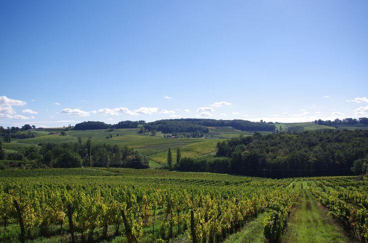 Pay de Bergerac vineyards drowse in the sun: thematuretraveller.co.uk