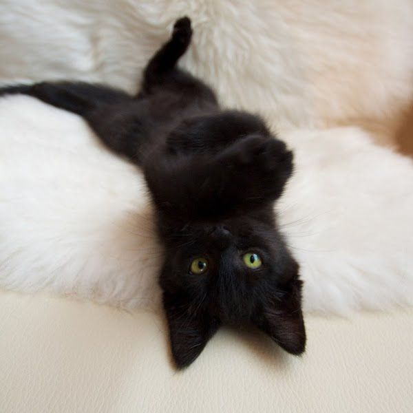 Black cats are gorgeous, but for some silly, sad reason they're always the ones left at the shelter!