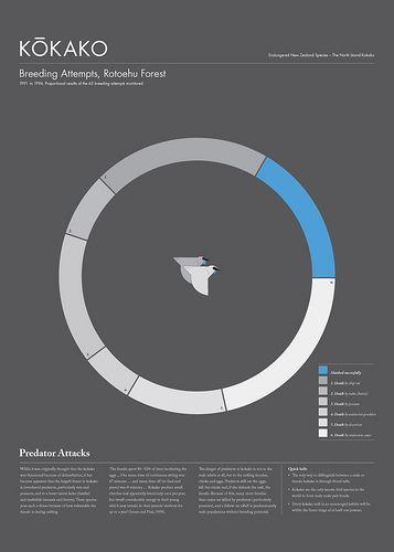 Tim Denee - Kokako infographic poster