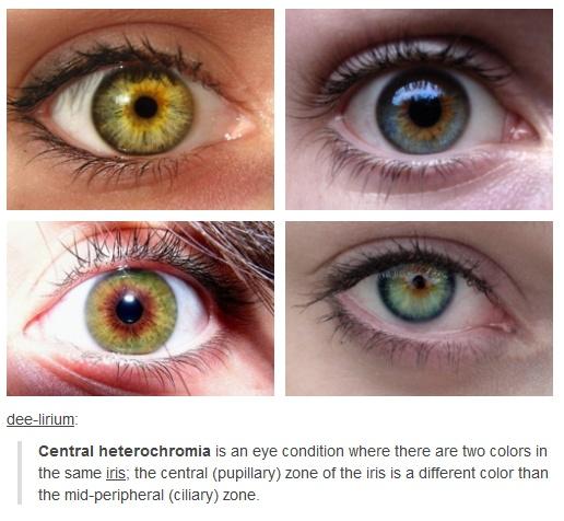 essay on mutation