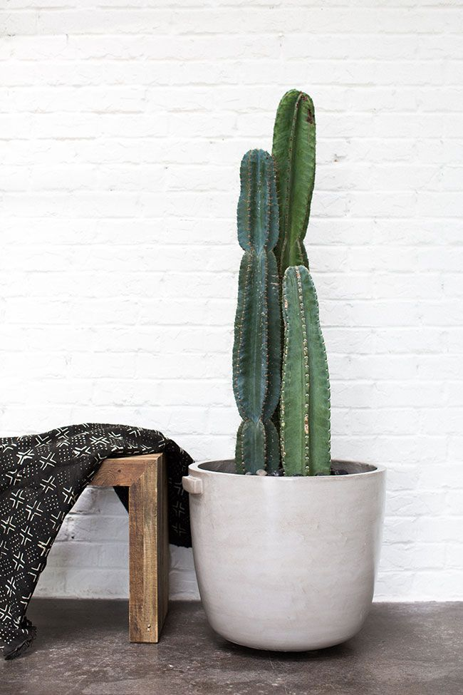 Accent Decor's Product Stylist loves styling the Dim Pot with African Mudcloth and Cacti!