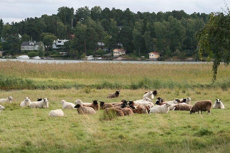 Cow Turku
