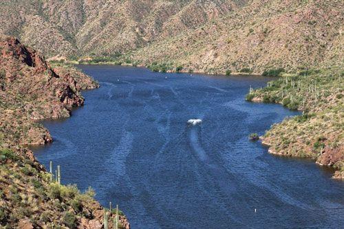 1000 images about arizona wildlife fishing on pinterest for Apache lake fishing