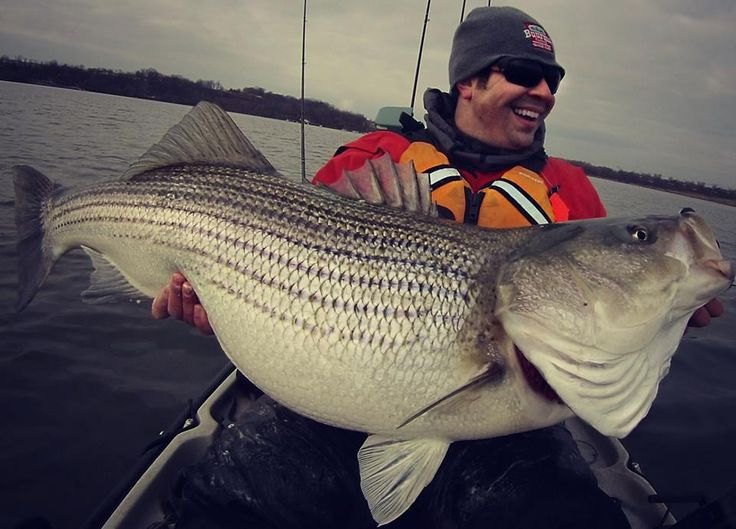 1075 best images about catch of the day on pinterest for Striped bass fishing tips