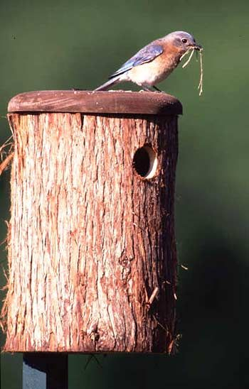 Rustic Bluebird House
