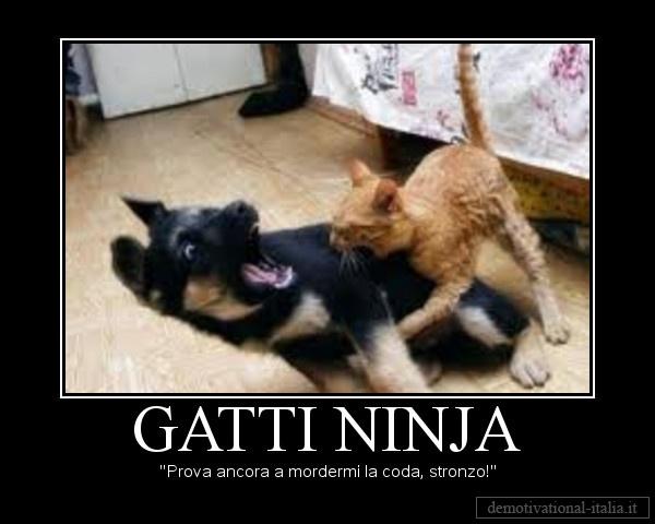 gatti ninja