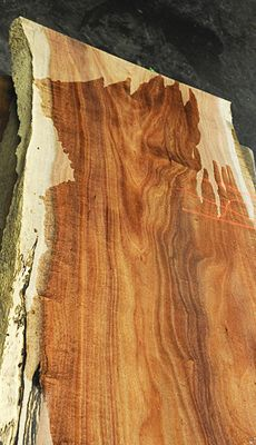 394 Best Wood Types Images On Pinterest Types Of Wood