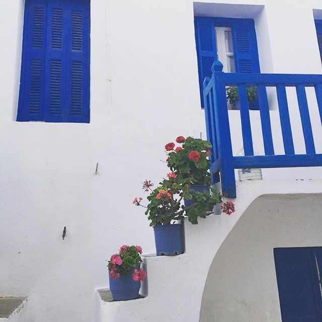 White and blue, #flowers and relaxing moments! #Folegandros #Cyclades Photo credits: @panosst