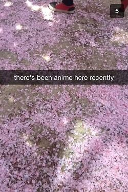 """This is live footage from Ouran Academy, right here on Pinterest."""