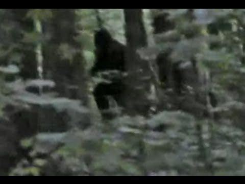 Breakdown: Incredible Bigfoot Footage