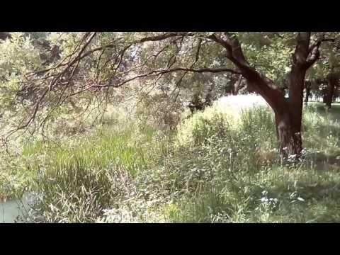 Stresszoldó relax videó :: Kereszteny-agnes #stresszoldó #relaxvideó #egeszsegkert #egészségkert #keresztényágnes