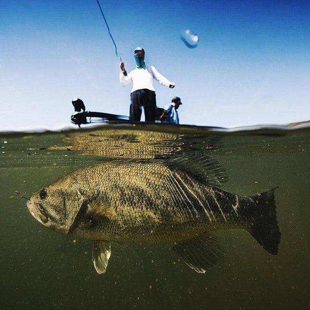84 best images about bass fishing on pinterest peacocks for Best time to go bass fishing