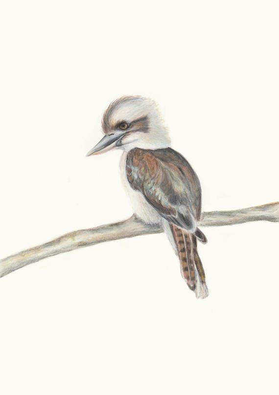 Kookaburra  Australian Bird Australian Wildlife Art Drawing /