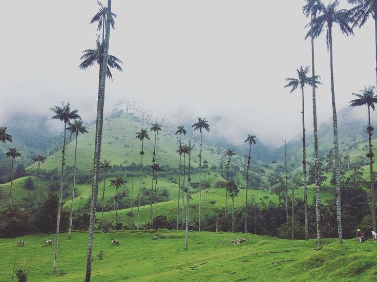 ナメック星�� #colombia #salento #cocoravalley #コロンビア #サレント#ココラ渓谷 #trekking #hiking #トレッキング #viaje #travelgram #travel #trip #南米 #一人旅 #旅 http://tipsrazzi.com/ipost/1514680008843787984/?code=BUFOXFjhP7Q