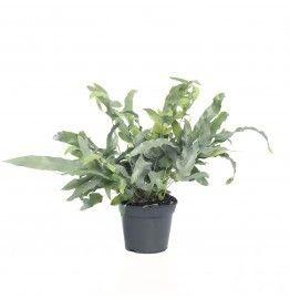 9 best Planten woonkamer images on Pinterest