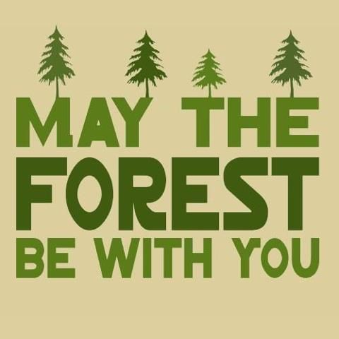 "May the Forest be with you! :)    ""I believe in the cosmos.  All of us are linked to the cosmos.  Look at the sun: If there is no sun, then we cannot exist.  So nature is my god.  To me, nature is sacred;  trees are my temples and forests are my cathedrals.""    - Mikhail Gorbachev, 1990      What does the forest mean to you?  We Are Wildness"