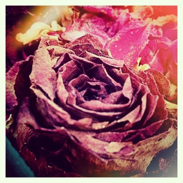 Rosas Secas ©www.aunioncreatividad.com