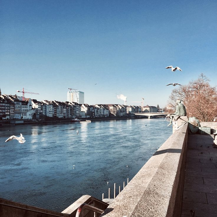 basel switzerland europe river rhine rhein view sunshine gulls winter