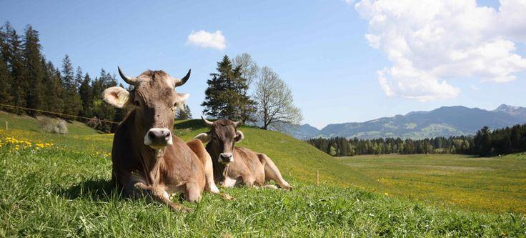 Allgaeu | Ferienwohnung Allgäu - Unterkunft und Ferienhaus im Allgäu (Bayern)