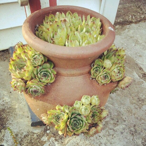 grow succulents in strawberry pots for an attractive look in your outdoor living space