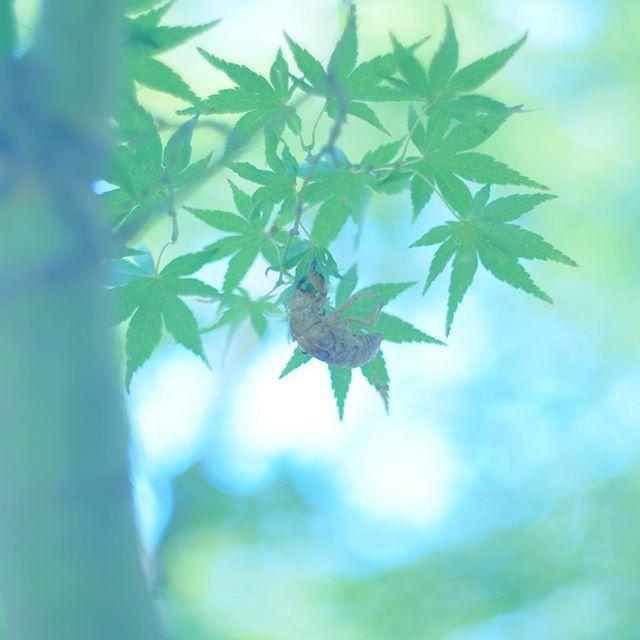 輪廻 ・ #fujifilmxt1 #fujifilm #単焦点 #オールドレンズ  #green #nature #写真好きな人と繋がりたい #写真撮ってる人と繋がりたい #IGersJP #instagramjapan #tokyocameraclub #東京カメラ部