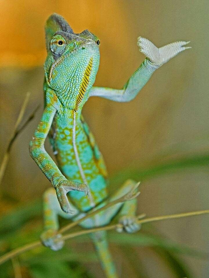 Best MyBrothers Images On Pinterest Drawings Best Friends - Someone gave their chameleon a miniature sword to hold and now everyones joining in