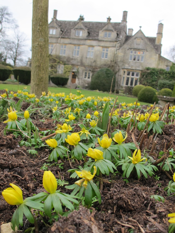 A very welcome sight at Barnsley House in the Spring - cheery Winter Aconites…