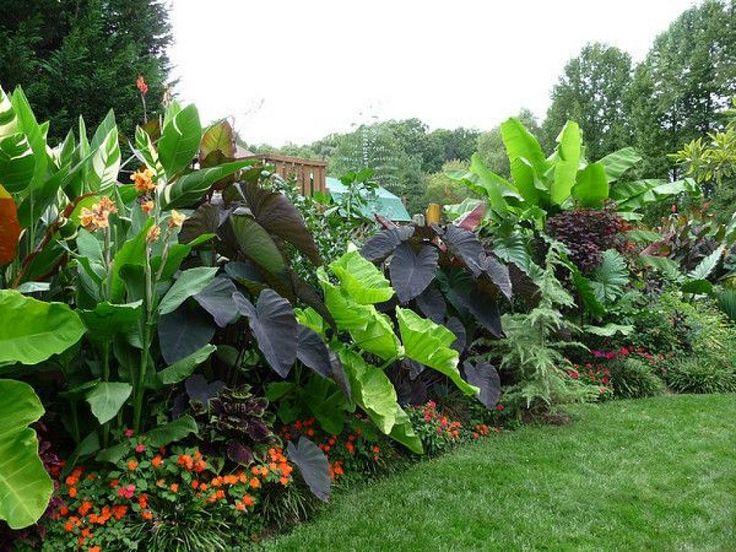 Las 25 mejores ideas sobre jardines tropicales en for Ideas de paisajismo