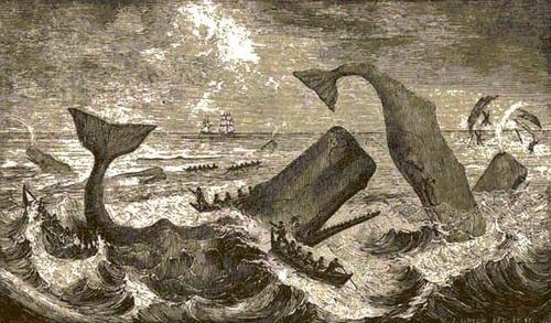 Beale's picture of Whale hunting ch. 56 of Moby Dick ...