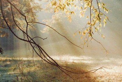 Evolution II fotobehang Morning Sun Rays Artikelnummer: 1180 Grootte: 372CM breed 250CM hoog Aantal delen: 8 Behangplaksel: Perfax roze Vliesbehang...