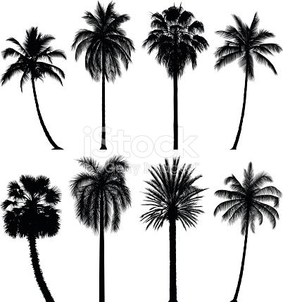Eight highly detailed palm tree silhouettes. Each leaf has been slavishly traced to give high detail.