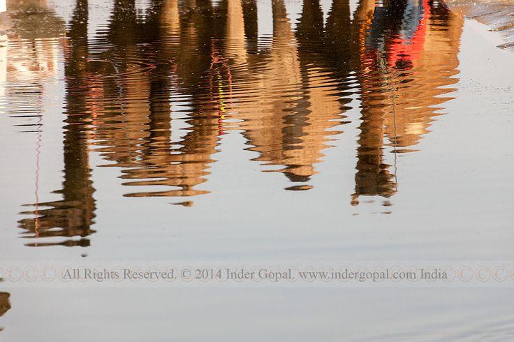 Pushkar Mela - Camels at a water spot