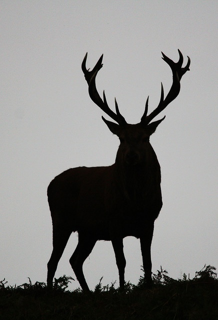 Stag Tattoo Idea My Kinda Ishhh Pinterest Stag