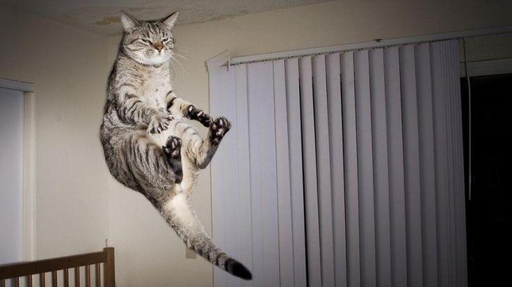 La Stampa - Acrobazie dei gatti Ninja negli scatti d'autore