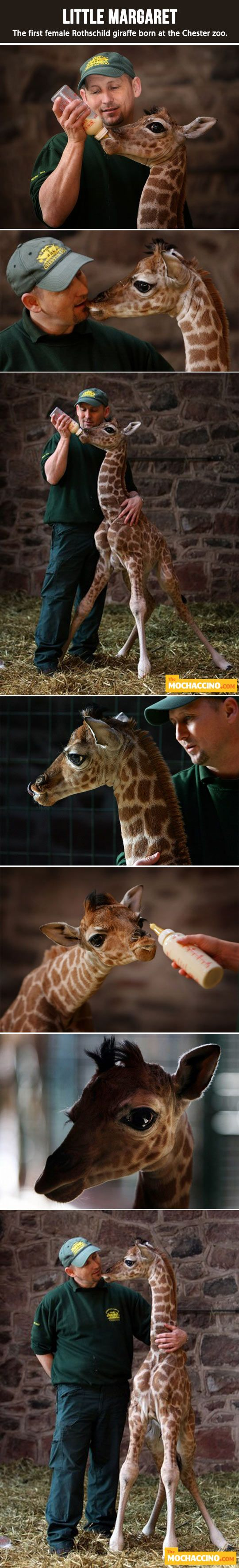 Omg that's adorable