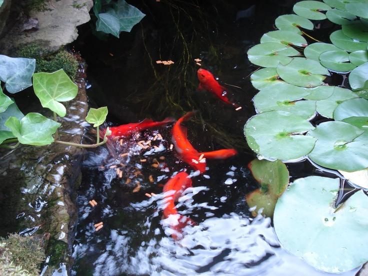 166 Best Garden Bonsai Images On Pinterest Gardening