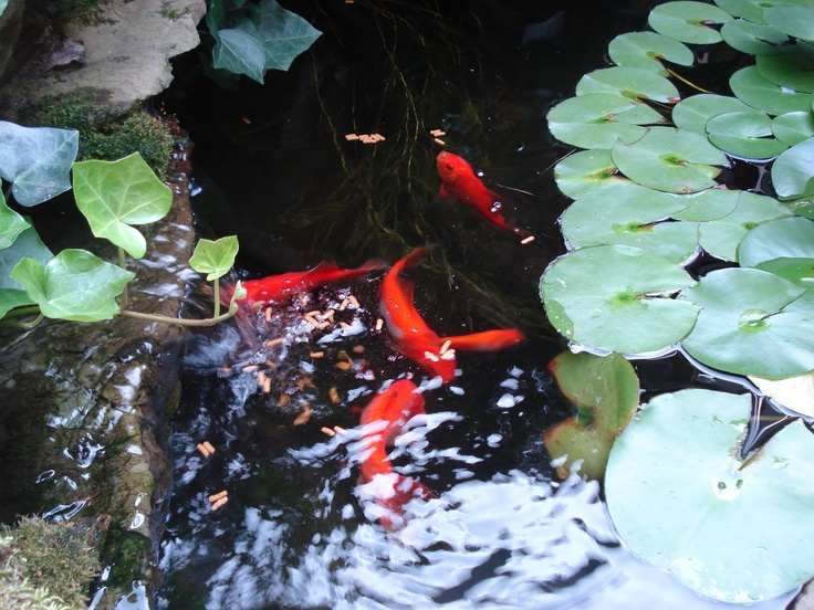 17 best images about koi ponds water features on pinterest for Fish pond features
