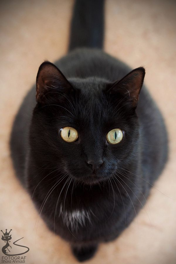 In memory of our cat Onyx. In March 2015, When she was three years old, she walked away one day and was never seen again!