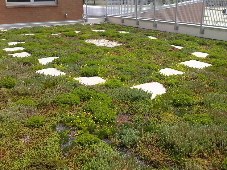 17 Best Images About Green Roofs In Cincinnati On