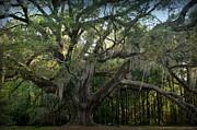 Lichgate Oak, Tallahassee, FL