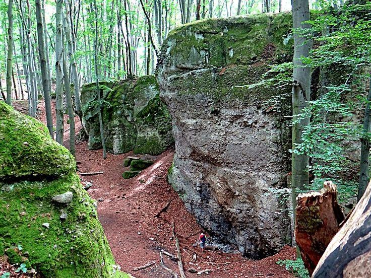 Fák,erdők,parkok.Elbi blogja: Dobogókő: Zsivány-körút