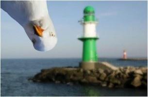 Love this!: Photobomb, Animals, Lighthouse, Photo Bombs, Funny Stuff, Funnies, Mine, Birds