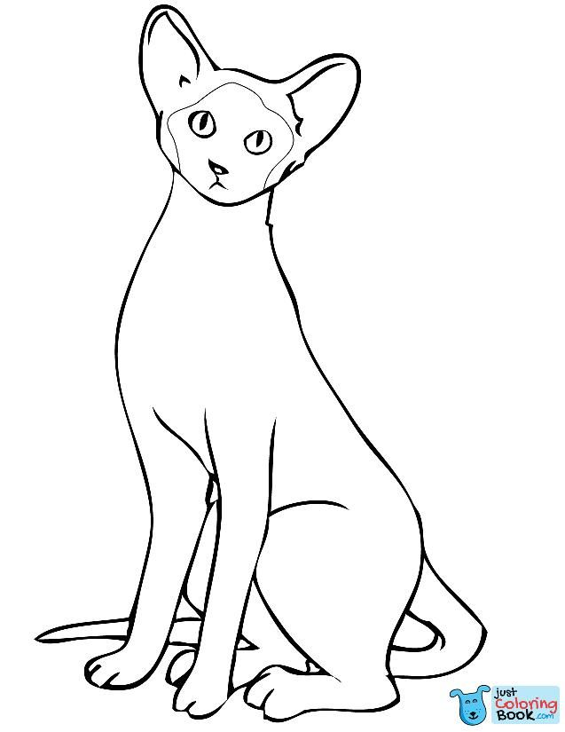 Coloring Ideas Cat Cartoon Coloring Pages Siamese Page Awesome
