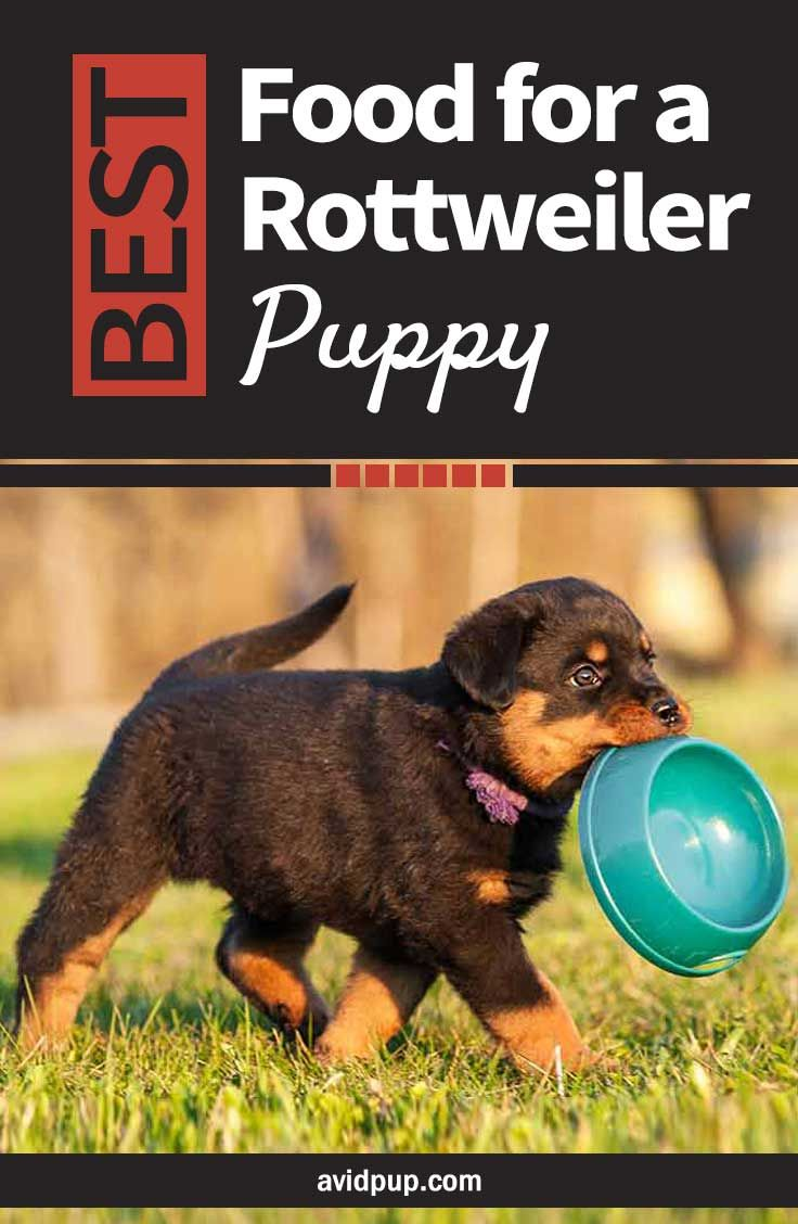 Best Food For A Rottweiler Puppy Top 7 Picks 5 Dry 2 Wet