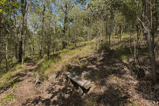 Walk with Balto at Belmont Hill Reserve, Carindale