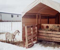 """The Costco carport goat shelter. Fencing is """"combi"""" cattle panels, which have smaller holes at the bottom."""