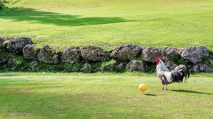 #Golf spielen im #Allgäu Hindernesse aller Art! ;-)