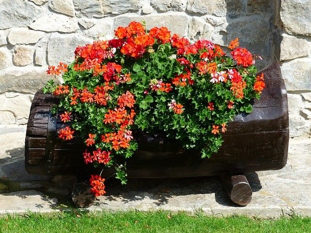 Az első hidegebb éjszakák hozzák a virágzás végét a teraszokon is. A télre való felkészítés a balkonnövényeink esetében is elkerülhetetlen. Meg kell kezdeni a telelésre szánt növények előkészítését és behordását.