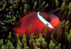 Pesci colorati - Foto gratis per sfondi desktop, #11430